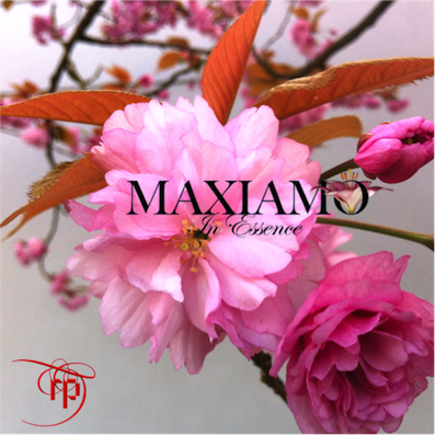 Fresh new website for Maxiamo Perfumes